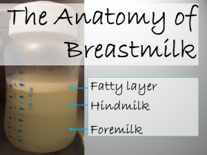 The-Anatomy-of-Breastmilk